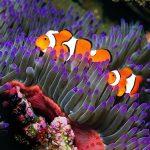 https://queenshotelportsmouth.com/wp-content/uploads/2020/01/blue-reef2-150x150.jpg